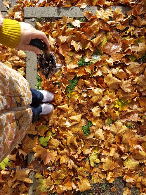 MAcleo im Herbst